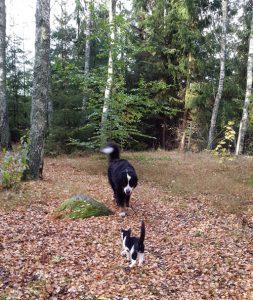 Mina älskade djur, Berner Sennehunden Tudor och kattungen Troll.