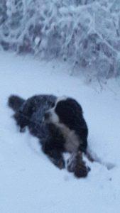 Tudor trotsar snö och kyla och tar apan med ut för att leka i snön.